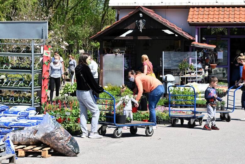 Mnóstwo osób wybrało się w sobotę, 9 maja po zakup drzewek, krzewów i innych roślin. Największe tłumy były w Centrum Euro - Ogród w Miedzianej Górze,
