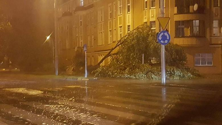 drzewo, okolice r. Grunwaldzkiego