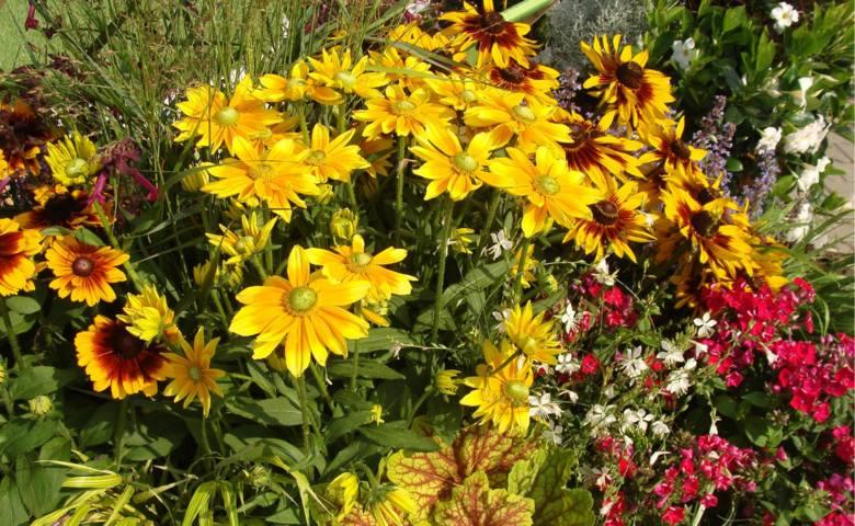 Późne lato i jesień może być pełne kolorów i kwiatów. Sporo roślin właśnie wtedy wygląda najpiękniej.