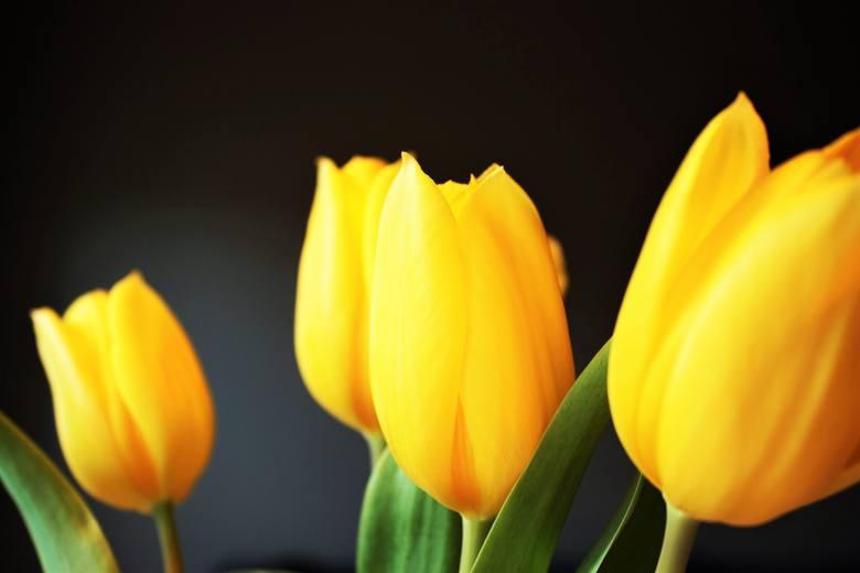 Życzenia imieninowe dla Krystyny na pewno sprawią jej radość. Świętuj imieniny Krystyny i złóż jej życzenia. Skorzystaj z naszych propozycji.