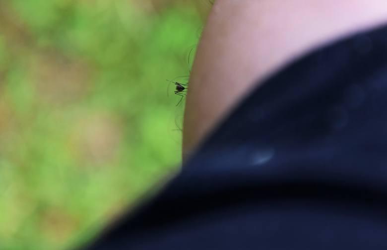 Fachowcy ostrzegają: komary mogą nas ciąć nawet do października. Chyba, że nadejdzie susza