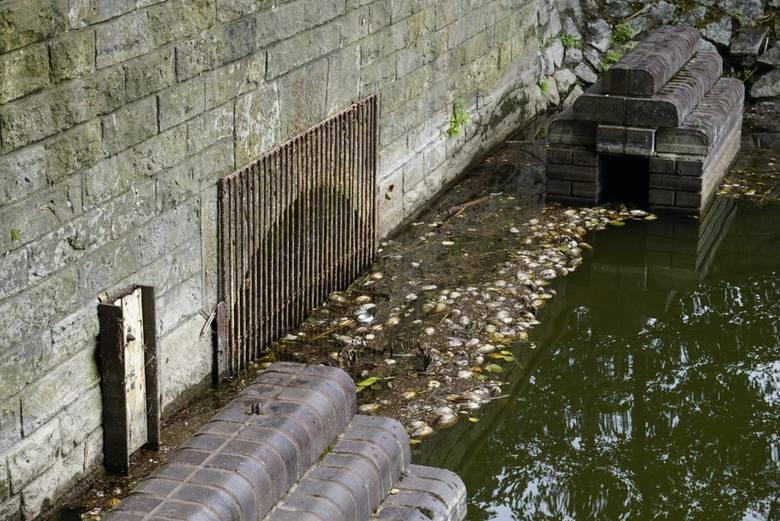 W lipcu 2018 znaleziono na brzegu jeziora Rusałka setki nieżywych małż. Do tej pory nie wiadomo co je zabiło. Ekolodzy przypuszczają, że mięczaki zabiły nieczystości. Sprawę wyjaśnia Regionalna Dyrekcja Ochrony Środowiska w Poznaniu.