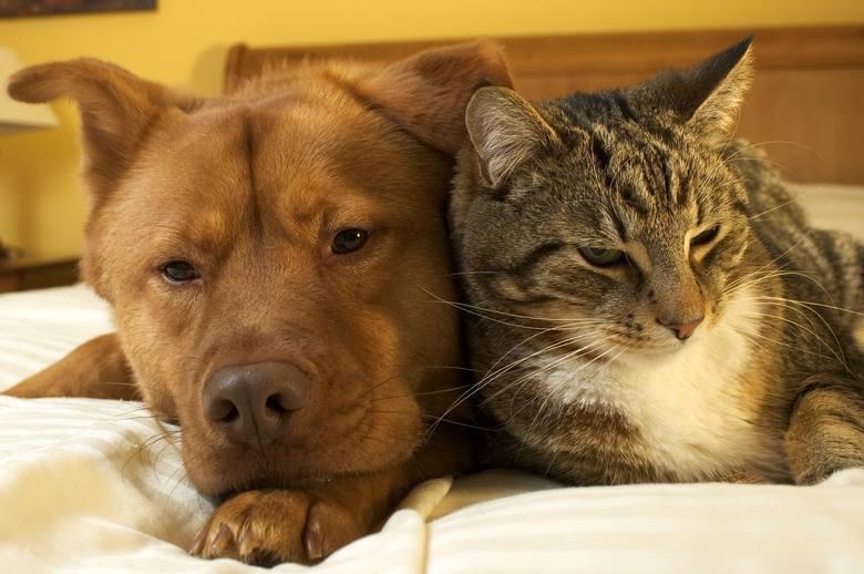 Aby przyspieszyć metabolizm, trzeba się wysypiać. Udowodniono jednak, że dzielenie łóżka z czworonożnym pupilem pogarsza jakość snu. Lepiej więc, by