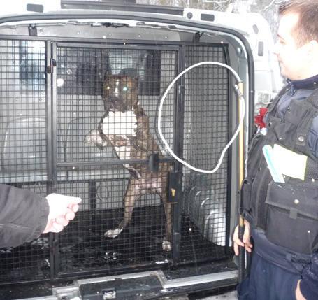 W tym roku funkcjonariusze straży miejskiej złapali już 42 bezpańskie psy.