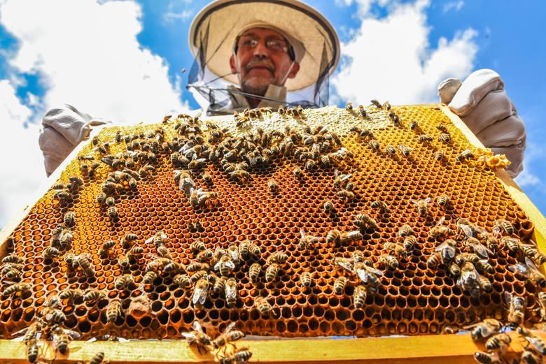 Roczna praca polskich pszczół wyceniona jest na - bagatela - ponad 4 miliardy złotych. Tyle straciliby sadownicy i rolnicy znad Wisły, gdyby nie mogli