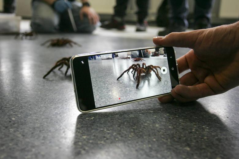 Największe pająki świata na pierwszym w Słupsku spotkaniu hodowców pajęczaków