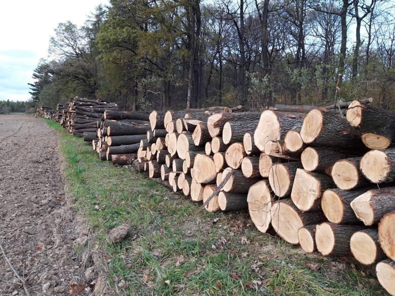 Masowa wycinka drzew. Ludzie interweniują. Nadleśnictwo realizuje swój dziesięcioletni plan