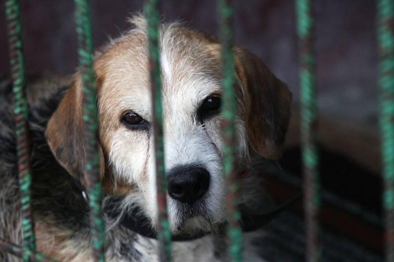 Z danych organizacji zajmujących się ochroną zwierząt wynika, że problem porzucania czworonogów w Polsce jest wciąż bardzo poważny i co roku dotyka tysięcy