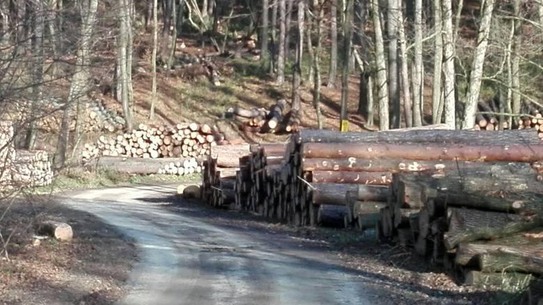 Mieszkańcy Kleszczowa chcą powstrzymać wycinkę drzew w bukowych lasach Tenczyńskiego Parku Krajobrazowego