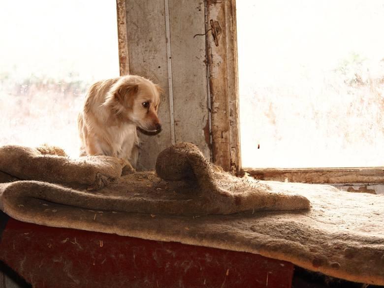 Po śmierci opiekuna, 14 psów zostało zamkniętych w ruinie