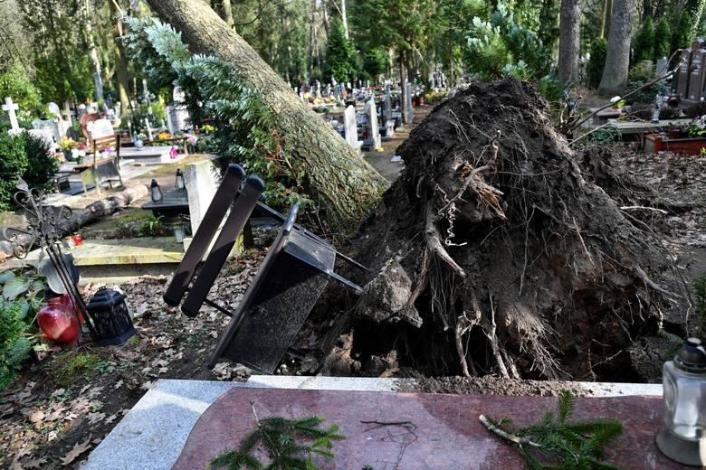 Cmentarz Centralny w Szczecinie po wichurze: połamane i powalone drzewa, uszkodzone pomniki [ZDJĘCIA]