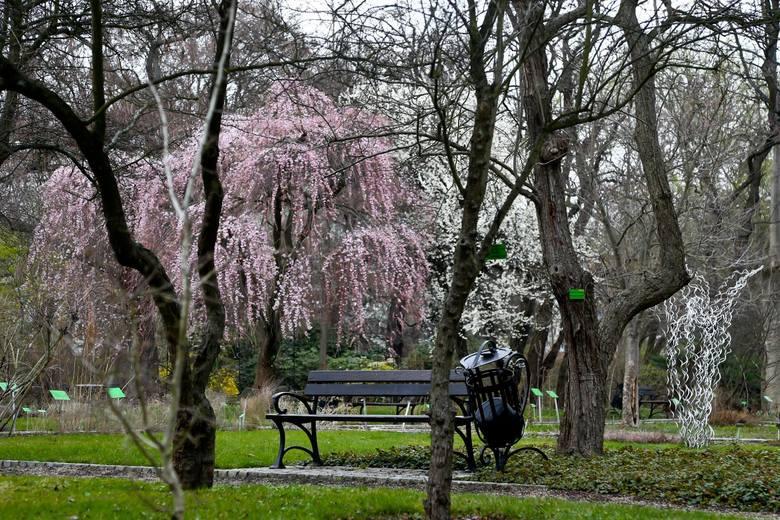 Wrocławski ogród botaniczny Uniwersytetu Wrocławskiego, marzec 2020