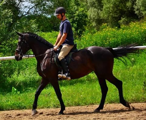 Ośrodek Jeździecki Włosań – bezpieczeństwo, wolność i przestrzeń. Tu można wsiąść na Estonię, Rosę, Kalandora i Olimpa