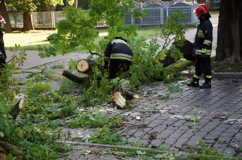 Dziś (czwartek 22.08) na jezdnię i chodnik przy ulicy Szarych Szeregów oberwał się fragment drzewa. Olbrzymich rozmiarów konar szybko został usunięty