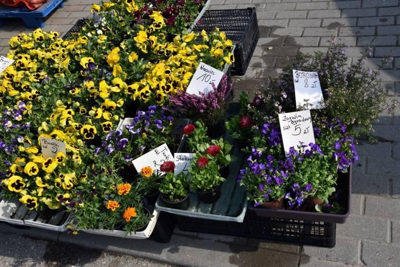Handel na targowisku w Kościerzynie kwitnie. Cenny sadzonek, kwiatów, owoców i warzyw [ZDJĘCIA]