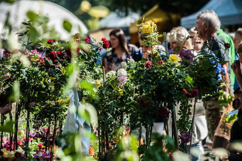 Jeszcze w niedzielę do godz. 16 na terenach przy hali Gwardii Koszalin trwać będą targi ogrodnictwa. Zobacz, co można znaleźć na stoiskach.