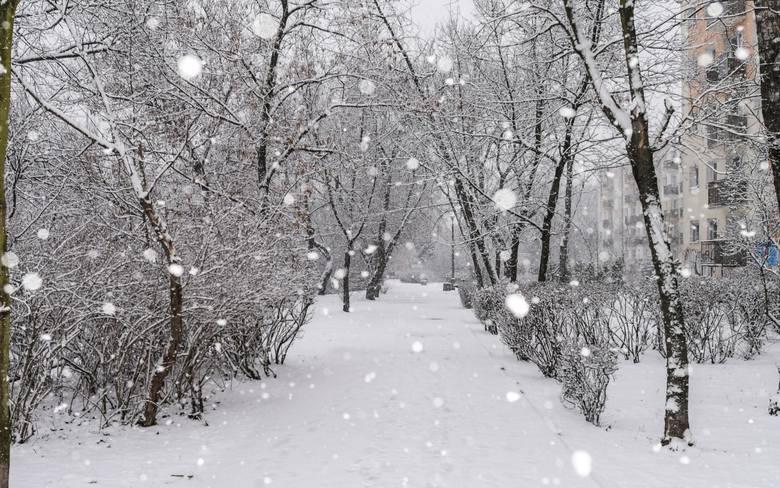 Jasnowidz z Człuchowa wie, jaka będzie zima 2019/2020
