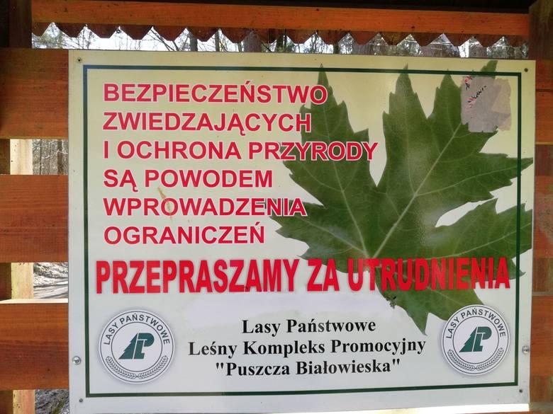 """Tragedia w Puszczy Białowieskiej. """"Nie wiedziałam, że dożyję takiego dnia"""""""