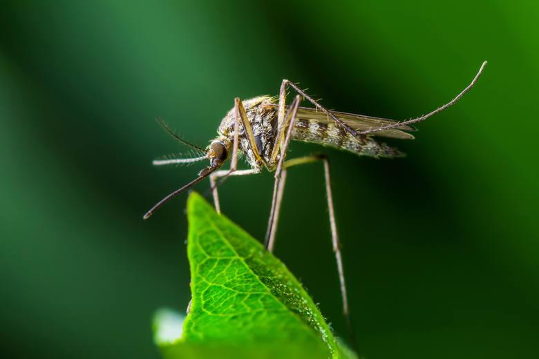 Tych owadów kiedyś u nas nie było, dziś przeżywamy ich plagę. Jak nam zagrażają?