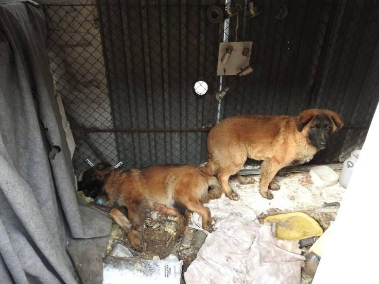 Aktywiści Animal Rescue Polska dokonali wstrząsającego odkrycia. Podczas jednej ze swoich interwencji znaleźli martwego psa. Chodzi o budkę gastronomiczną