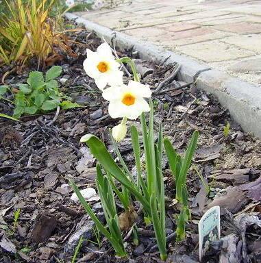"""Takie wiosenne zdjecia zrobila 13 paLdziernika przed swoim domem nasza Czytelniczka Aleksandra Szypula. """"Zastanawiam sie, czy to znów wiosna."""