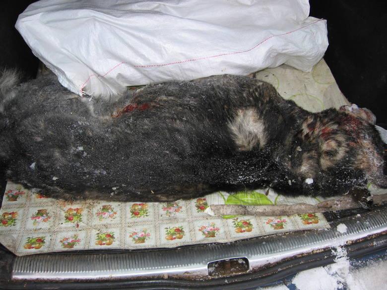 Nie ma wątpliwości, że ten bestialski czyn został dokonany z premedytacją. Uważa, że psy mogły zostać celowo zwabione, pod nieobecność w domu jego i