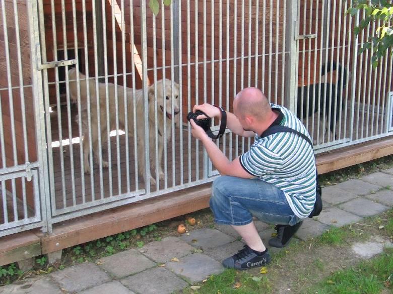 Wolontariusze stowarzyszenia Młodość ze Sztuką chcą przekonać ludzi do adopcji starych i chorych psów.