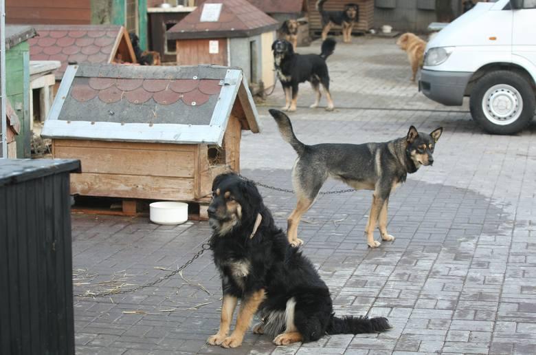 Sto kurtek i spodni roboczych posłuży do wyściełania bud, w których mieszkają psy i koty.