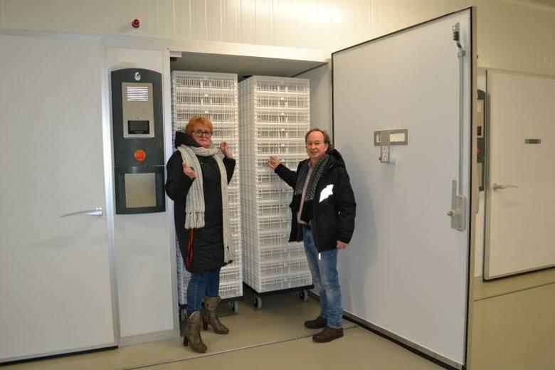 Na 13 stycznia zaplanowano oficjalne otwarcie Zakładu Wylęgu Gęsi w Zakładzie Doświadczalnym Instytutu Zootechniki. W Kołudzie Wielkiej koło Janikowa
