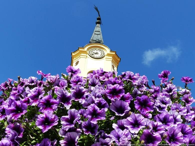 Zdjęcia kwiecistego Bielska Podlaskiego przygotowane na potrzeby ósmej edycji plebiscytu Terra Flower Power - Najpiękniej Ukwiecone Miasto w Polsce.Więcej