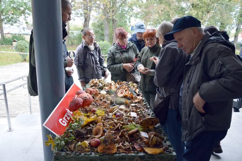 Wystawa grzybów w Parku Krajobrazowym Dolina Słupi.