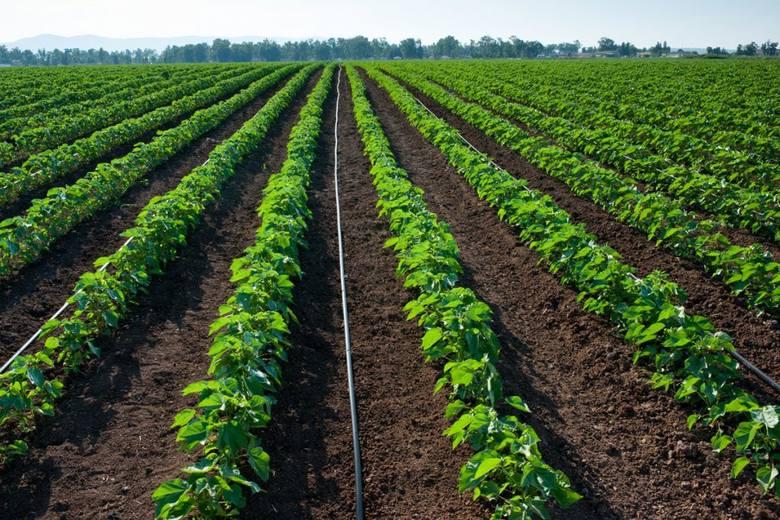 Wydajny system nawadniania dla upraw polowych. Nawadnianie kroplowe vs. deszczowe