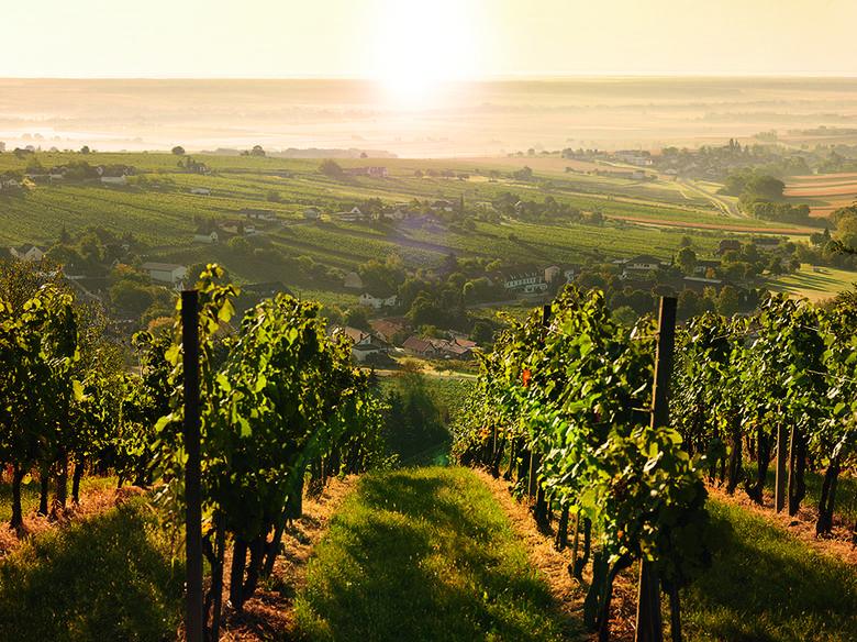 Cudowne winnice Burgenlandu