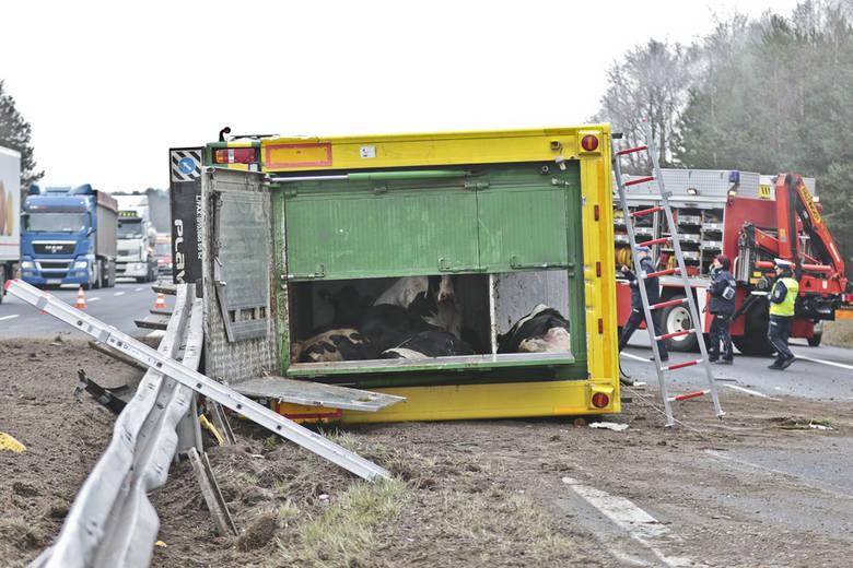 Wypadek ciężarówki ze zwierzętami na drodze S3 pod Zieloną Górą.