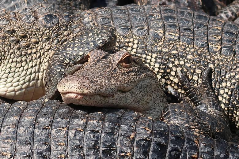 Z USA i Kanady nie wolno przewozić produktów ze skór krokodyli, żywych gadów, produktów ze ssaków morskich (walenie, morsy), piór  dzikich  ptaków,