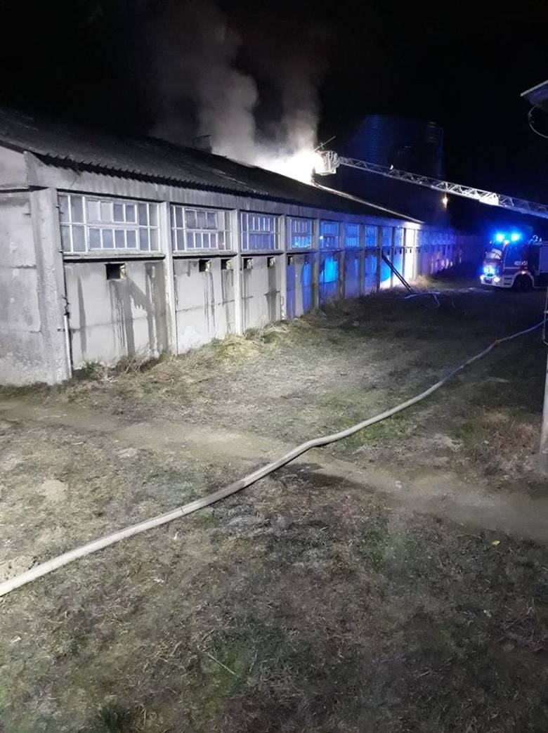 Do akcji gaśniczej skierowano 16 zastępów straży z powiatu chodzieskiego i ościennych powiatów. Przyjechała również grupa operacyjna z Komendy Wojewódzkiej
