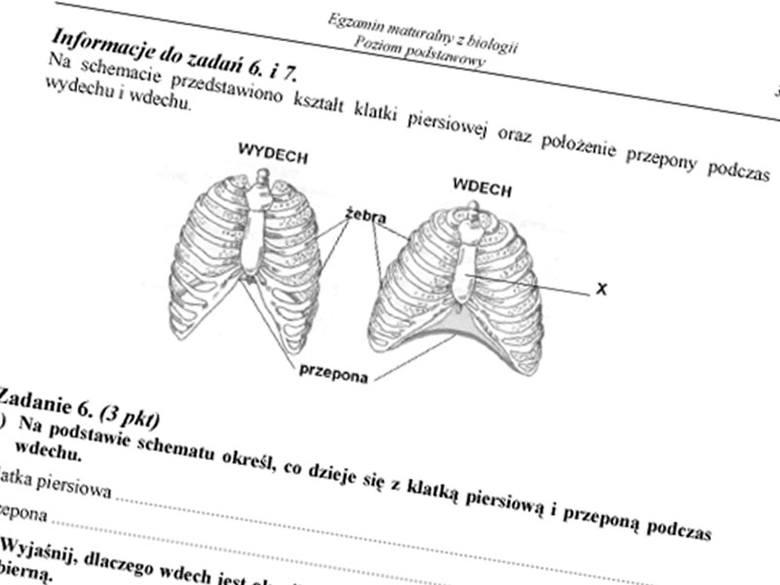 Matura 2011. Biologia - ODPOWIEDZI