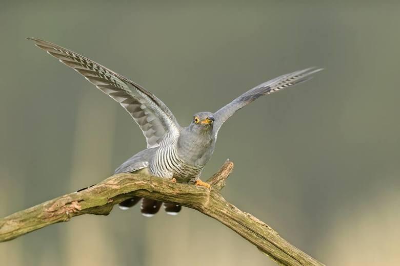 Sztuczna wyspa lęgowa z tajnym miejscem do obserwacji ptaków?