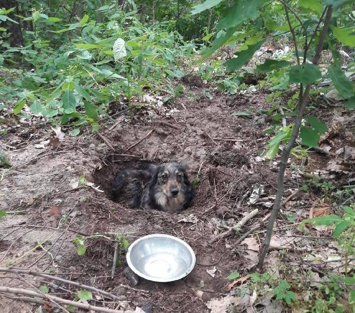 Policjanci z Kolbuszowej zatrzymali rano właściciela psa, który został żywcem zakopany w lesie