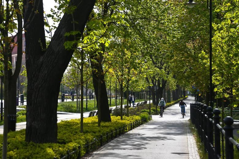 We Wrocławiu planowane jest posadzenie nowych drzew i krzewów. Głównie zasilą one parki i zieleńce, ale wśród podanych przykładowych miejsc widnieją