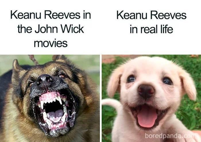 """> Keanu Reeves w serii filmów """"John Wick""""> Keanu Reeves w życiu"""