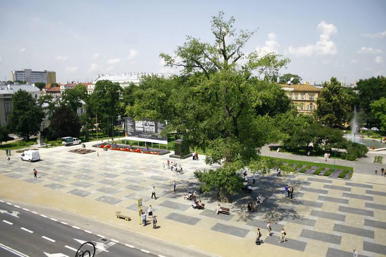 Baobab współcześnie, przed rozpoczęciem remontu placu Litewskiego.