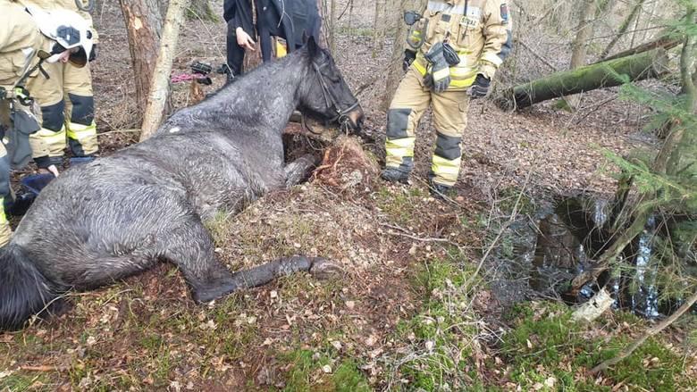 Konie zostały wypłoszone przez szarżującego kierowcę quada. Ugrzęzły na podmokłym terenie i nie mogły się ruszyć. Na pomoc ruszyli strażacy z OSP Potęgowo.