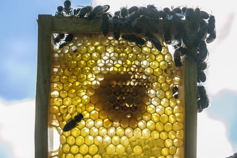 Rolniku, nie truj naszych pszczół!