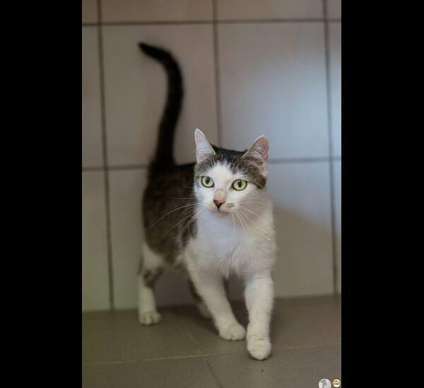 Effi  to ciekawa człowieka kotka. Wykorzysta każdą okazję, by ją pogłaskać. Uwielbia to! Podobnie jak wszelkiego rodzaju zabawy. Dogaduje się z innymi kotami, potrafi świetnie zachować czystość.