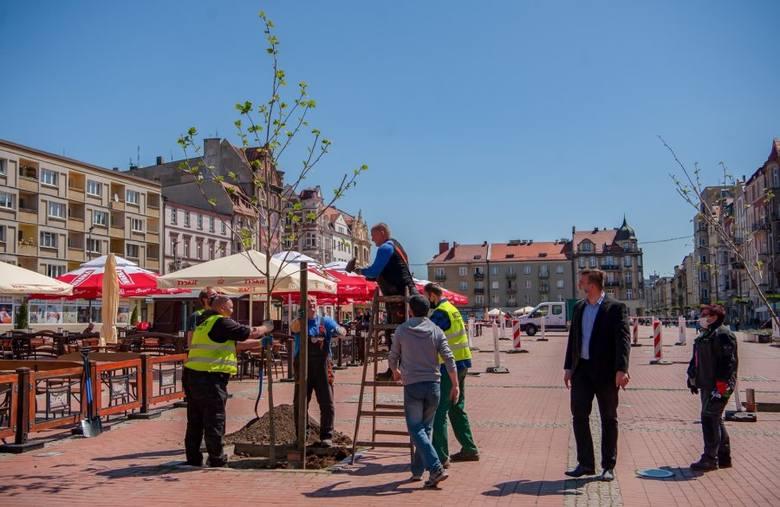 Rozpoczęła się rewitalizacja zieleni na Rynku w Bytomiu. Zobacz kolejne zdjęcia. Przesuwaj zdjęcia w prawo - naciśnij strzałkę lub przycisk NASTĘPNE