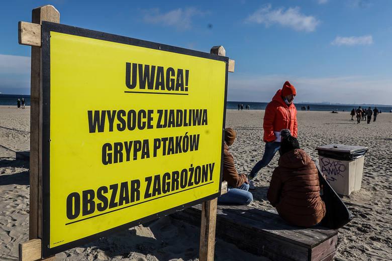 Od końca roku 2020 w niektórych powiatach województwa pomorskiego potwierdzono ogniska ptasiej grypy. Przypominamy, czym jest choroba, co ją wywołuje,