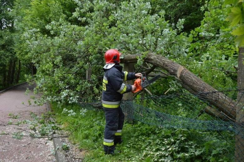Silny wiatr w Bielsku-Białej i powiecie: strażacy mieli sporo pracy - powalone drzewa, uszkodzone dachy