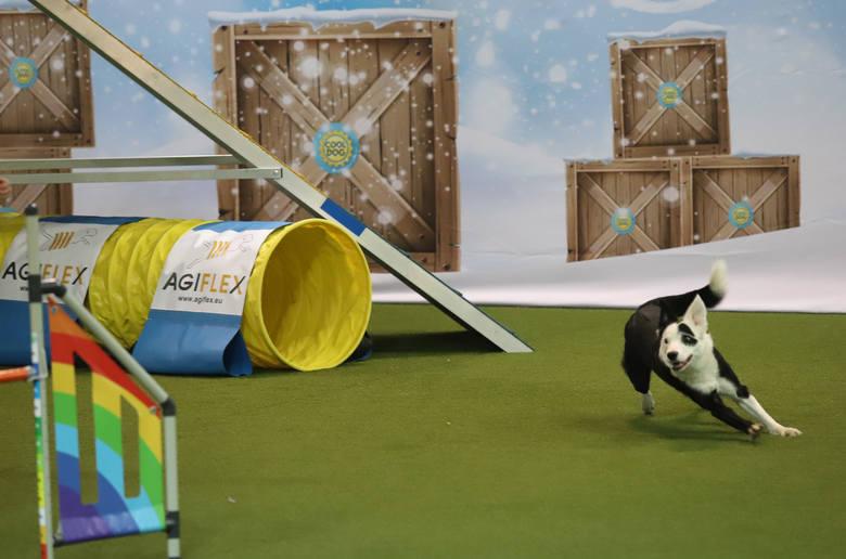 Zawody Agility w Czeladzi. Psy i ich właściciele rywalizowali w kilku konkurencjach [ZDJĘCIA]