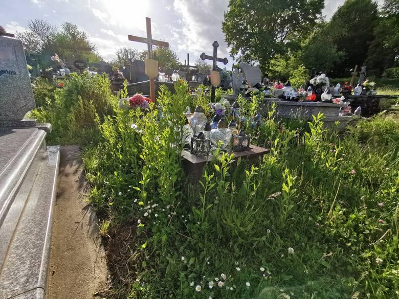 Cmentarz Główny przy ul. Słowackiego to aktualnie nie najlepsza wizytówka Przemyśla. Nekropolia zarośnięta jest trawą. Terenem opiekuje się Zakład Usług